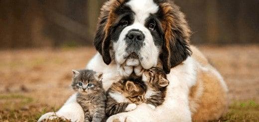 Accueil, garde animaux domestiques